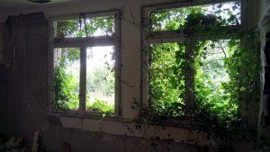fenêtre lierre